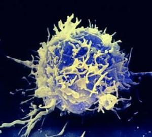linfocita-t