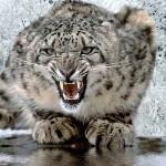 Miao! (fonte della foto: ijackphone.com)