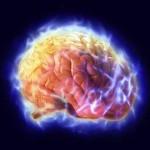Il cervello: la causa di, e la soluzione a tutti i nostri problemi. Fonte foto: http://tumoricanegatto.blogspot.it