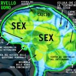 cervello-delluomo