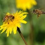 api-piante