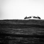due formiche chattano su skype