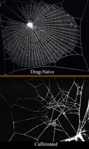 Caffeinated_spiderwebs
