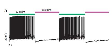 PAL - attivazione/inattivazione neurone