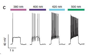 PAL - attivazione graduale neurone