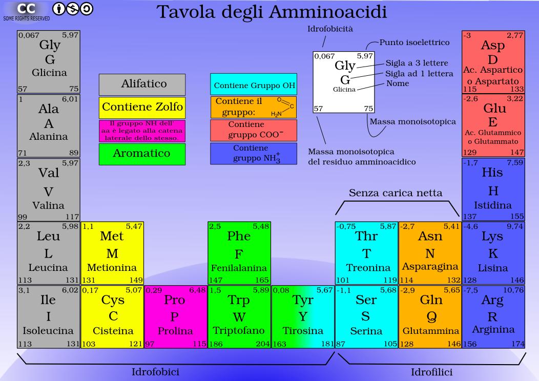 Tavola periodica degli aminoacidi bioinfo blog - Tavola periodica degli alimenti ...
