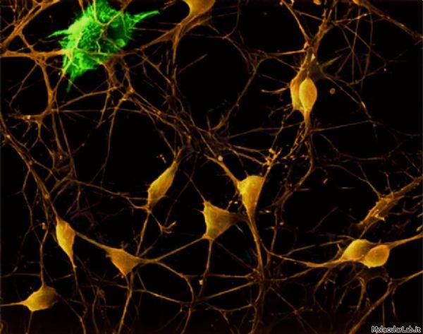 I Neuroni Specchio Nello Sport